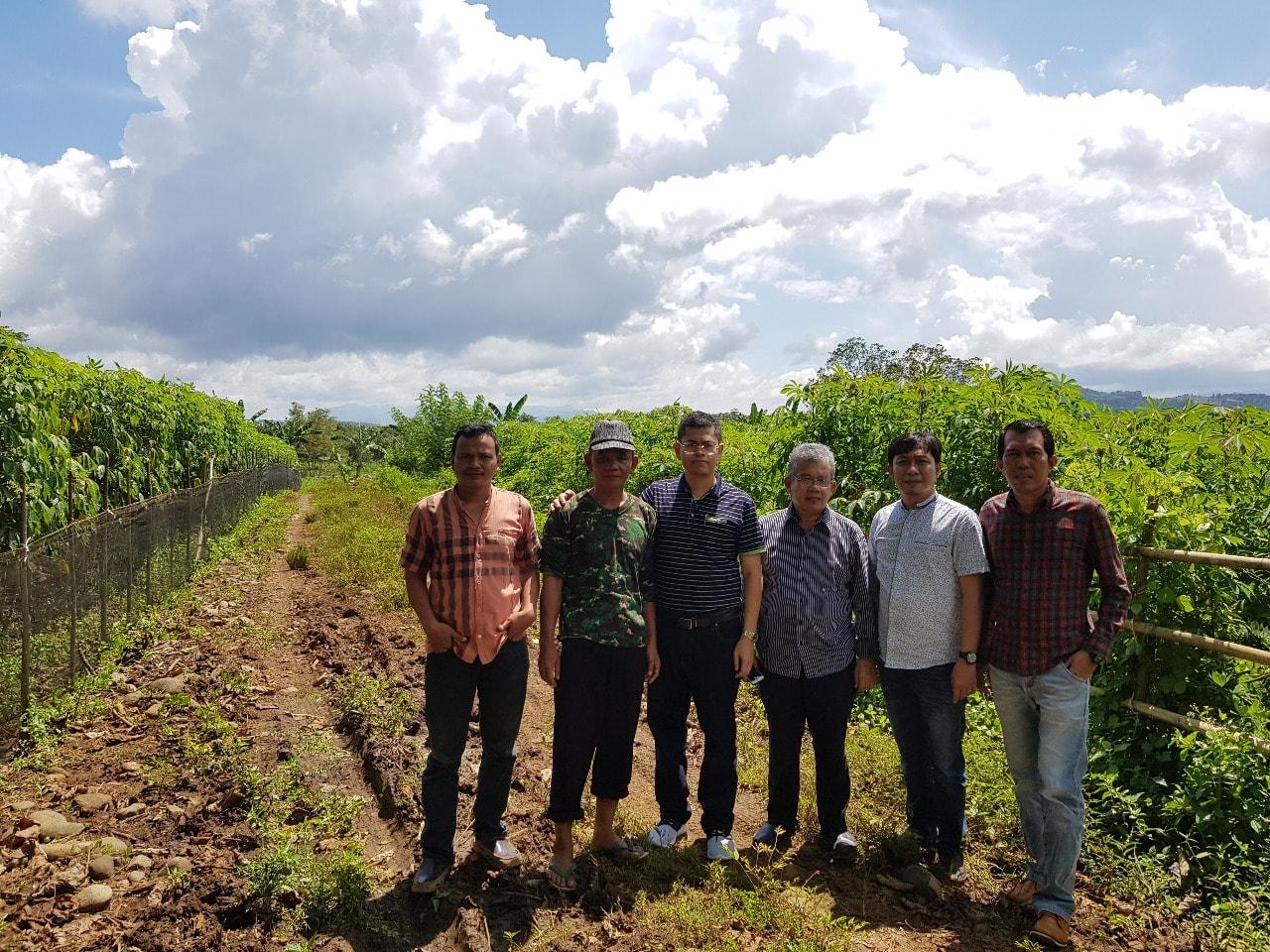 mitra tani cassava adalah kelompok mitra tani terpercaya cirill indonesia
